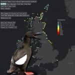 seabirds_screenshot